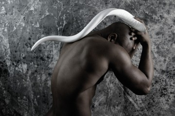 Série Africa - Lee Zebre
